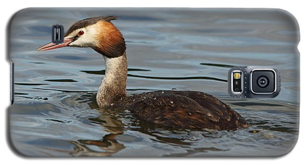 Great Crested Grebe Galaxy S5 Case