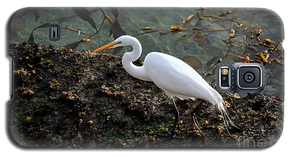 Great Egret At A Low Tide Galaxy S5 Case