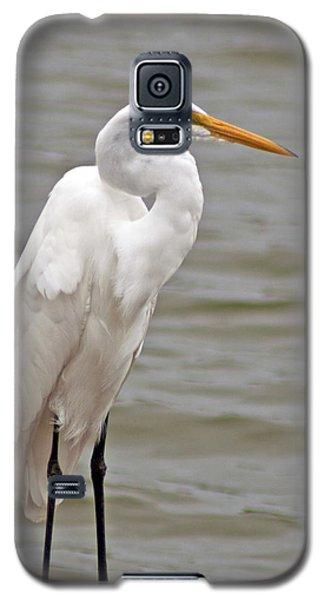 Great Egret Galaxy S5 Case by Bill Barber