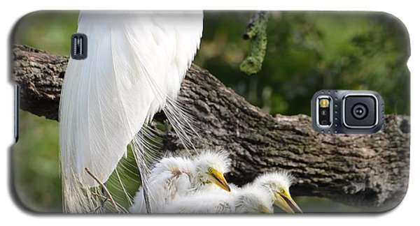 Great Egret Family  Galaxy S5 Case