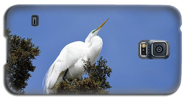 Galaxy S5 Case featuring the photograph Great Egret by Gary Wightman