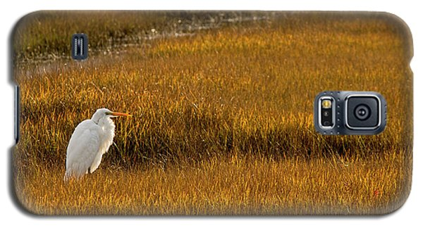 Great Egret In Morning Light Galaxy S5 Case