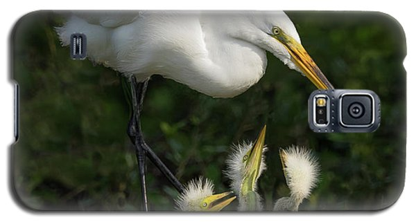 Great Egret With Chicks Galaxy S5 Case