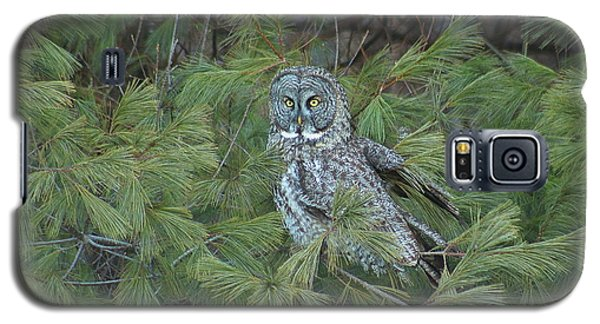 Great Gray Owl In Pine Tree Galaxy S5 Case by John Burk