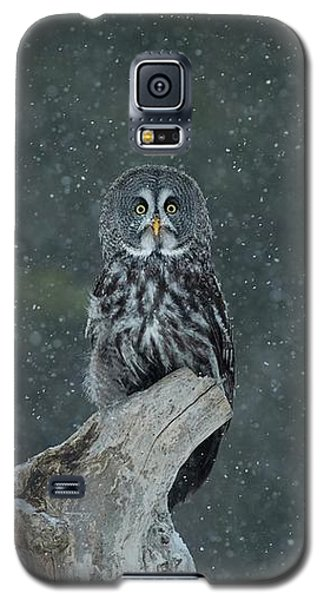Great Gray Owl In Snowstorm Galaxy S5 Case by CR Courson
