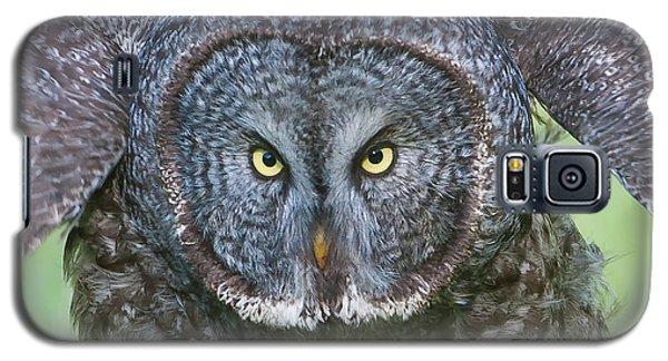 Great Gray Owl Flight Portrait Galaxy S5 Case