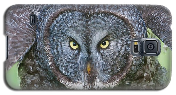 Great Gray Owl Flight Portrait Galaxy S5 Case
