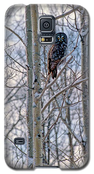 Great Grey Owl Galaxy S5 Case