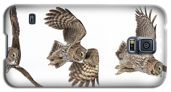 Galaxy S5 Case featuring the photograph Great Grey Owl Hunting by Mircea Costina Photography