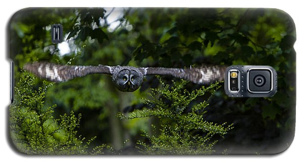 Great Grey Owl In Flight Galaxy S5 Case