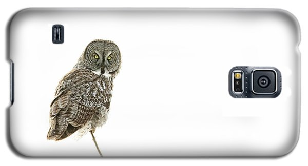 Galaxy S5 Case featuring the photograph Great Grey Owl On White by Mircea Costina Photography