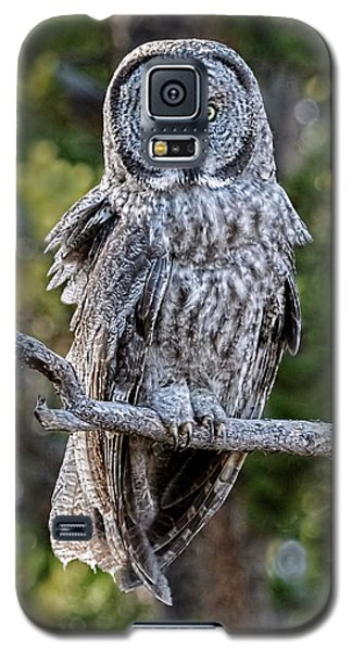 Great Grey Owl Yellowstone Galaxy S5 Case