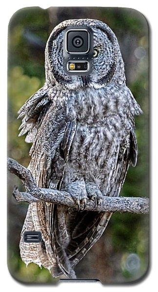 Great Grey Owl Yellowstone Galaxy S5 Case