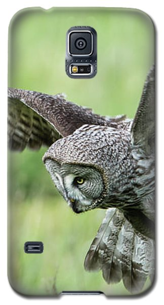 Great Grey's Focused Gaze Galaxy S5 Case