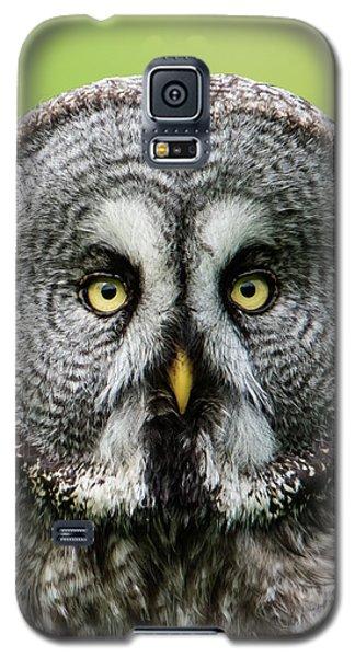 Great Grey's Portrait Closeup Square Galaxy S5 Case