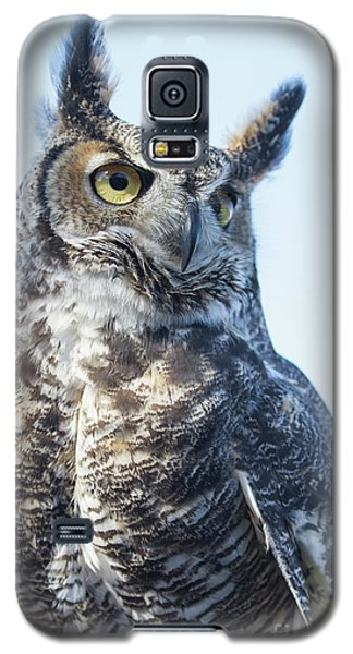 Great Horned Owl 1 Galaxy S5 Case