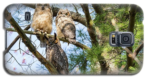 Great Horned Owl Family Galaxy S5 Case