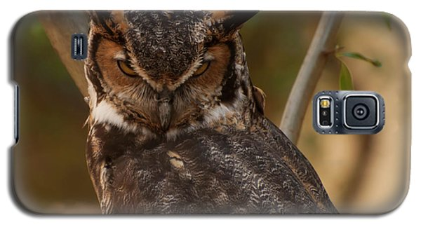 Great Horned Owl In A Tree 2 Galaxy S5 Case by Chris Flees