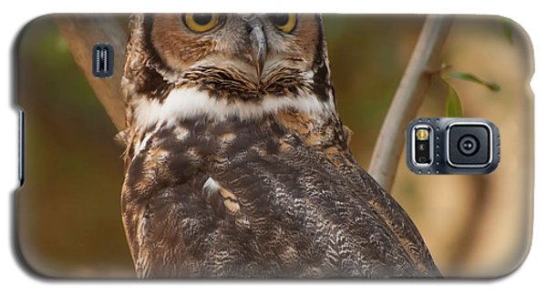 Great Horned Owl In A Tree 3 Galaxy S5 Case by Chris Flees