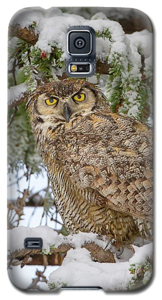 Great Horned Owl In Snow Galaxy S5 Case by Jack Bell