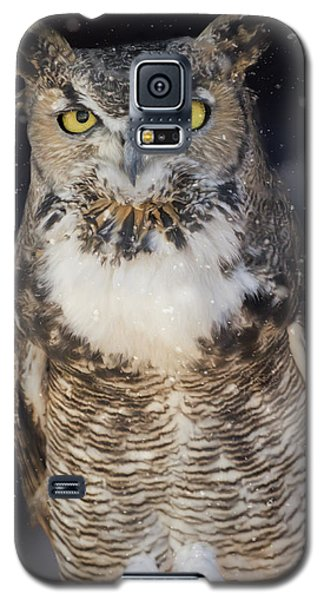 Great Horned Owl In The Snow Galaxy S5 Case