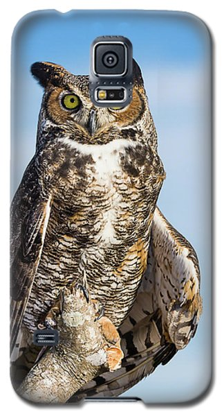 Great Horned Owl Portrait - Winged Ambassadors Galaxy S5 Case