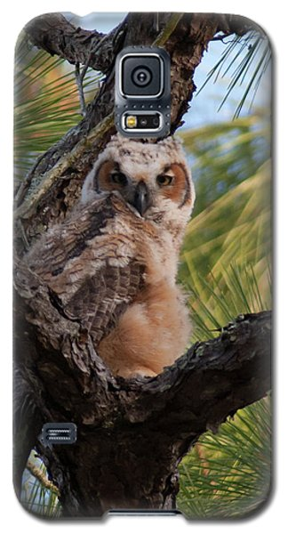Great Horned Owlet Galaxy S5 Case
