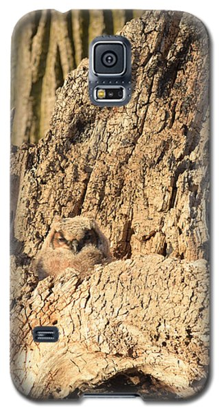 Great Horned Owlet Two Galaxy S5 Case