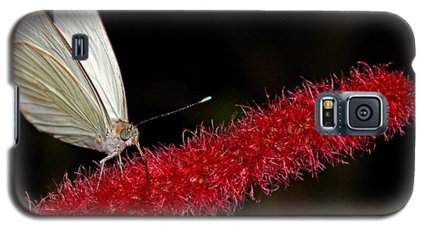 Galaxy S5 Case featuring the photograph Great Southern White by Judy Vincent