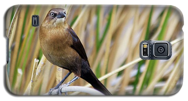 Great-tailed Grackle Galaxy S5 Case by Afrodita Ellerman