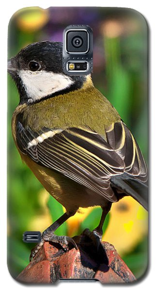 Great Tit British Bird Parus Major Galaxy S5 Case
