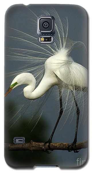 Majestic Great White Egret High Island Texas Galaxy S5 Case by Bob Christopher