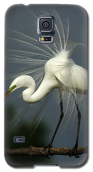 Majestic Great White Egret High Island Texas Galaxy S5 Case