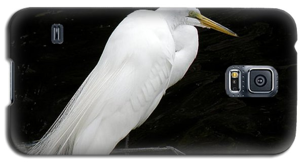 Galaxy S5 Case featuring the photograph Great White Egret by Rosalie Scanlon
