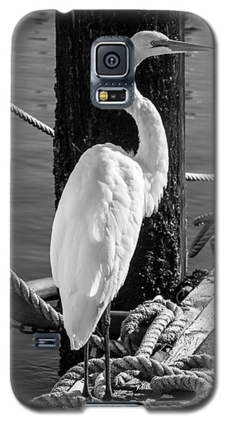 Great White Heron In Black And White Galaxy S5 Case by Garry Gay