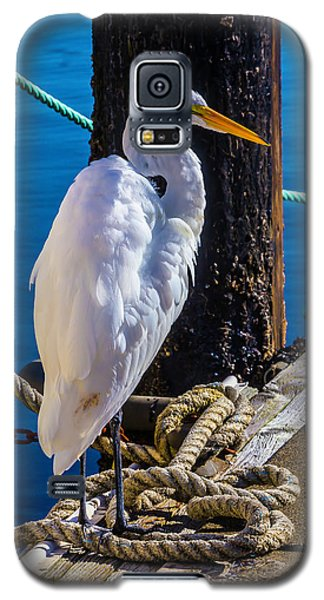 Great White Heron On Boat Dock Galaxy S5 Case by Garry Gay