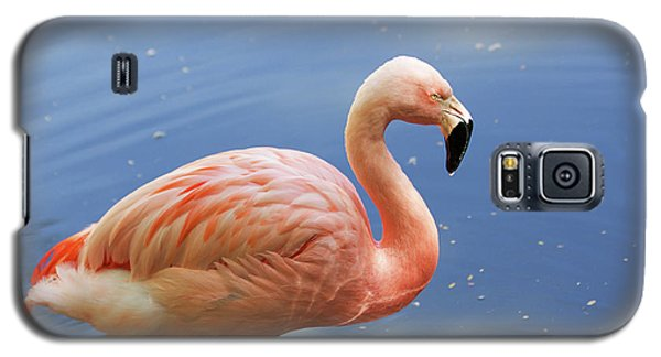 Greater Flamingo Galaxy S5 Case by Afrodita Ellerman