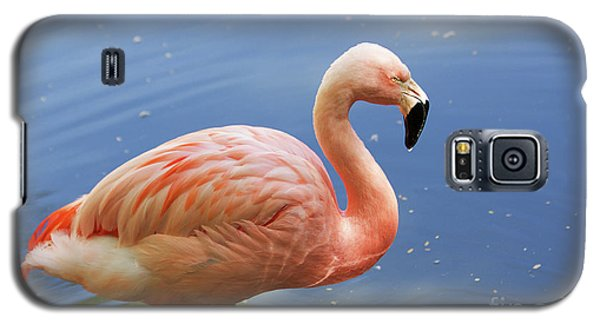 Greater Flamingo Galaxy S5 Case