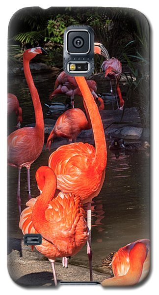 Greater Flamingo Galaxy S5 Case