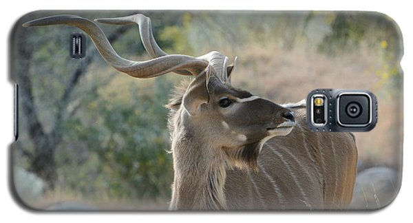 Galaxy S5 Case featuring the photograph Greater Kudu 4 by Fraida Gutovich