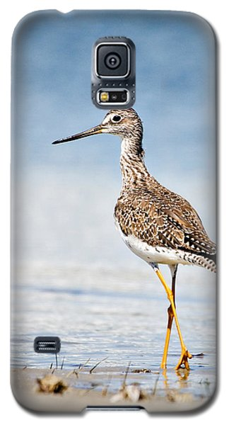 Greater Yellow Legs At Rachel Carson Estuarine Reserve Galaxy S5 Case by Bob Decker