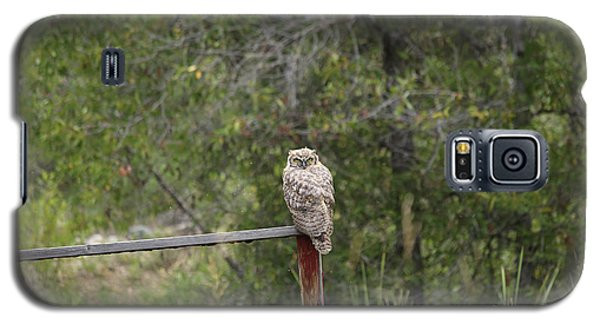 Greathornedowl2 Galaxy S5 Case