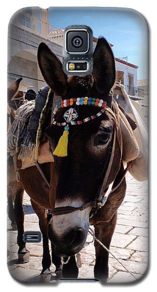 Greek Donkey Galaxy S5 Case