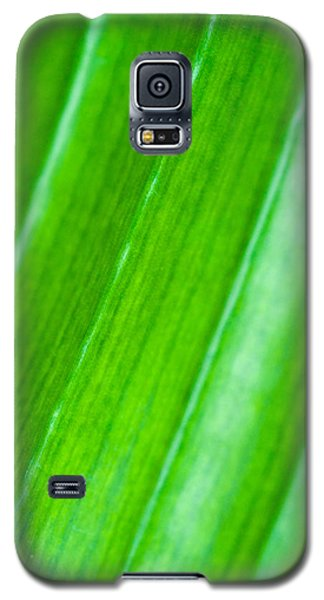 Plant Galaxy S5 Cases - Green Abyss Galaxy S5 Case by Sebastian Musial
