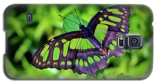 Green And Black Butterfly Galaxy S5 Case
