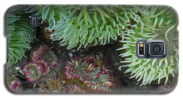 Green And Strawberry Anemonies Galaxy S5 Case