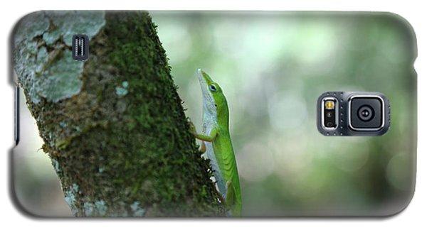 Green Anole Climbing Galaxy S5 Case