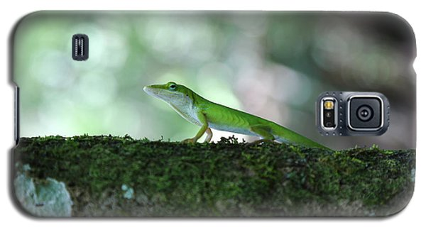 Green Anole Posing Galaxy S5 Case