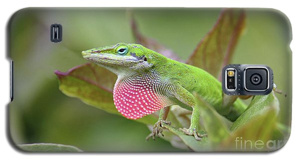 Green Anole Galaxy S5 Case