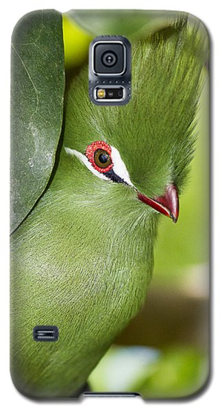 Green Turaco Bird Portrait Galaxy S5 Case